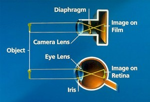 A diagram showing the similarities between the eye and a camera.